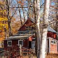 White Birches and Red Farmhouse Marlboro Vermont Print by Robert Ford