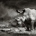 White Rhinoceros Poster by Johan Swanepoel