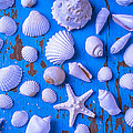 White Sea Shells On Blue Board Print by Garry Gay