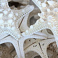 White Starfish Print by Carol Groenen