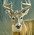 Whitetail Buck Print by Paul Krapf