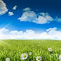 Wild daisies in the grass with a blue sky Poster by Sandra Cunningham