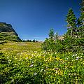 Wild Mountain Flowers Glacier National Park   by Rich Franco