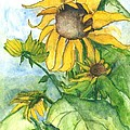 Wild Sunflowers Print by Sherry Harradence