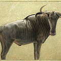 Wildebeest Poster by James W Johnson