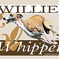 Willie the Whippet Poster by Liane Weyers