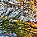 wind ripples Print by David Flitman
