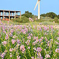 Wind turbine and flowers Poster by Gynt