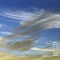 Windswept Poster by Kaye Menner