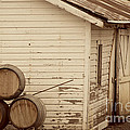 Wine Barrels and Rustic White Barn Poster by Juli Scalzi