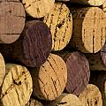 Wine bottle corks Print by David May