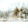 Winter Colors Poster by Julie Palencia