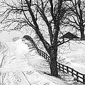 Winter Driveway Print by Wendell Thompson