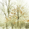 Winter Leaves Poster by Julie Palencia