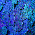 Winter London Plane Tree Abstract 4 Print by Margaret Saheed