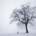 Winter tree and bench in fog Poster by Elena Elisseeva