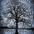 Winter tree in snowfall Print by Elena Elisseeva