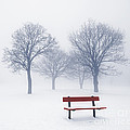 Winter trees and bench in fog Print by Elena Elisseeva