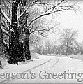 Winter White Season's Greeting Card Poster by Carol Groenen