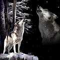 Wolf  howling memory Poster by Gina Femrite