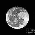 Wolf Moon Waning Print by Al Powell Photography USA