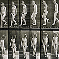 Woman descending steps Poster by Eadweard Muybridge