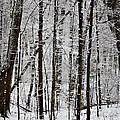 Woods On a Snowy Night Poster by Penny Hunt