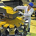 Worker with pasta packing machine Print by Science Photo Library