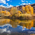 Yellow Fall Reflections Poster by Robert Bales