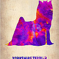 Yorkshire Terrier Poster Print by Irina  March
