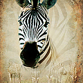 ZEBRA PROFILE Poster by RONEL BRODERICK