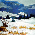 High Country Elk Poster by Curt Peifley