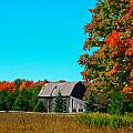 old barn in fall color Print by Robert Pearson