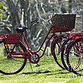 Red Bicycle in the Country Poster by Anahi DeCanio