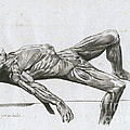 A Flayed Cadaver Print by Science Source