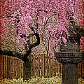 Asian Spring Print by Chris Lord