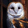 Barn Owl  Poster by Anthony Jones