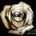 Brown Rose - Digital Painting Print by Merton Allen