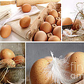 Collage of brown eggs images  Poster by Sandra Cunningham