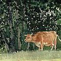 Cow in Pasture Print by Winslow Homer