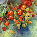Currants berries painting Poster by Svetlana Novikova