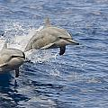 Dolphins Leaping Print by Dave Fleetham - Printscapes
