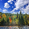 Fall forest in sunshine Print by Elena Elisseeva