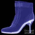 High Heel Boot X-ray Poster by Ted Kinsman