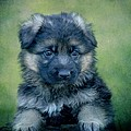 Long Coated Puppy Print by Sandy Keeton