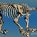 Megatherium Extinct Ground Sloth Print by Science Source