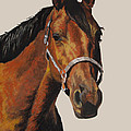 Quarter Horse Poster by Ann Marie Chaffin