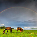 Rainbow Horses Poster by Evgeni Dinev