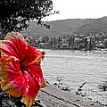 Red Hibiscus  Print by Mira Dimitrijevic