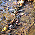 Rocks in water Print by Elena Elisseeva